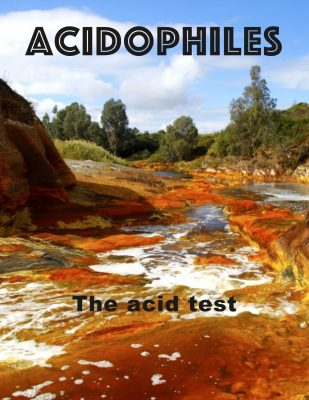 Acidophiles flip book cover