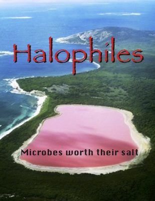 Halophile flip book cover