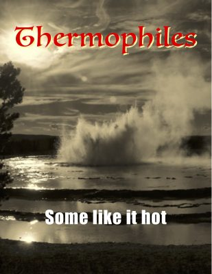 Thermophile flip book cover
