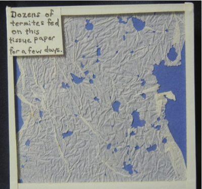 Termite eating tissue paper